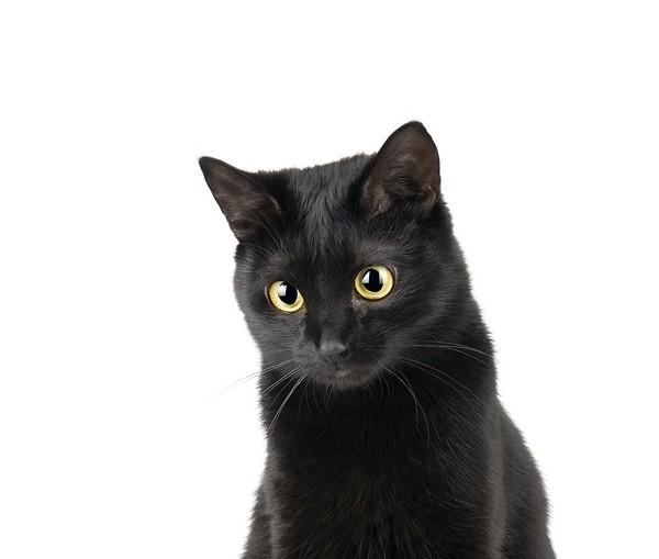 アイコン 黒猫.jpg